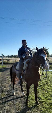 Cavalo garanhão quarto de milha e égua mestiça - Foto 6
