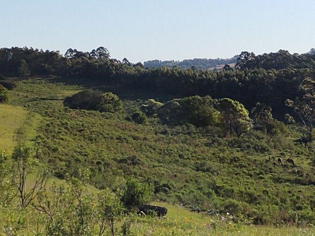 Fazenda na Cascata - 75 ha - Pelotas - RS - Foto 18