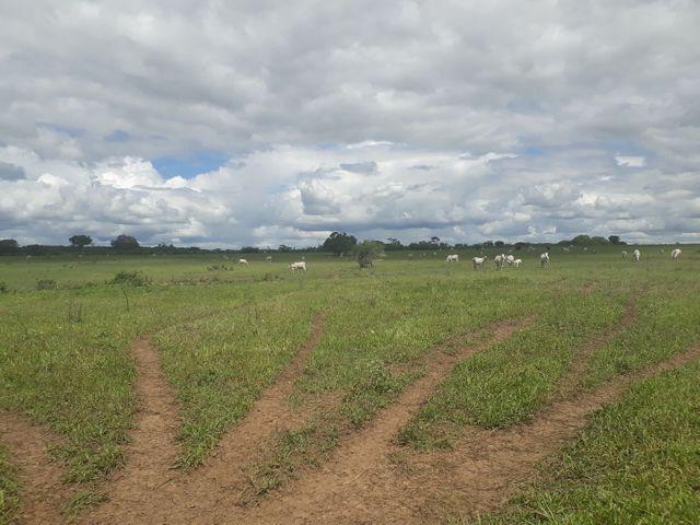 Fazenda com 190 hectares na região do vale de Monte  - Foto 12