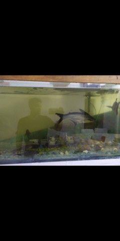 Vendo aquario 240 litros  - Foto 3