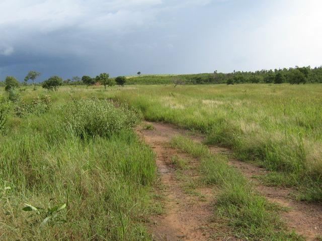 Almas-TO - Fazenda distante de Palmas 210 Km - Foto 15