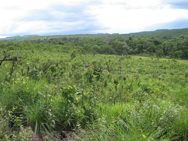 Almas-TO - Fazenda distante de Palmas 210 Km - Foto 11