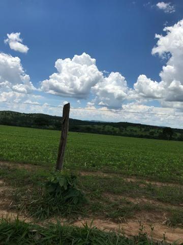 Oportunidade Extra Fazenda 100 Alqueires ou 484 Hectares Aragoiânia - Foto 9
