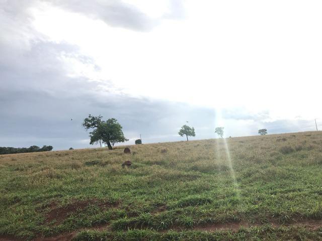 Fazenda plana e rica em água, 24 Alqueires (116.16 ha ) Bela Vista de Goias - Foto 15
