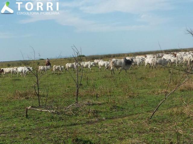 Fazenda a venda em Corumbá - Foto 17