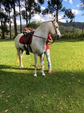 Vendo cavalo mangalarga! - Foto 2