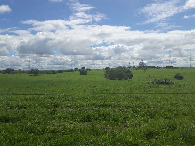 Fazenda com 190 hectares na região do vale de Monte  - Foto 11