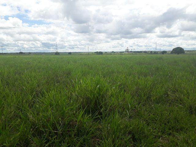 Fazenda com 190 hectares na região do vale de Monte  - Foto 3