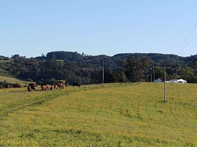 Fazenda na Cascata - 75 ha - Pelotas - RS - Foto 17