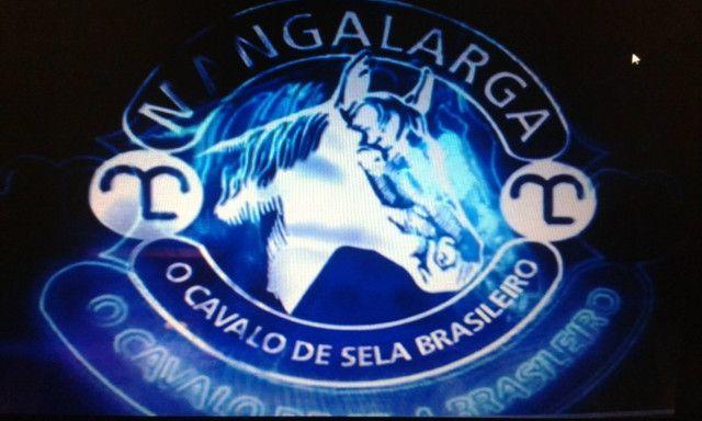 Potros Mangalarga Paulista- - - Foto 3