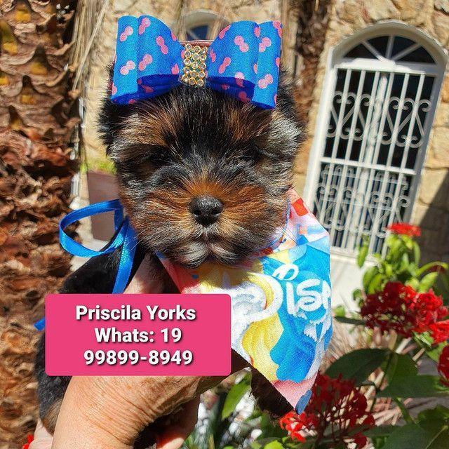 Yorkshire Terrier - Foto 5