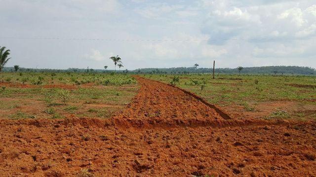 Fazenda arrenda pra lavoura 1.000 hectares nordeste mt