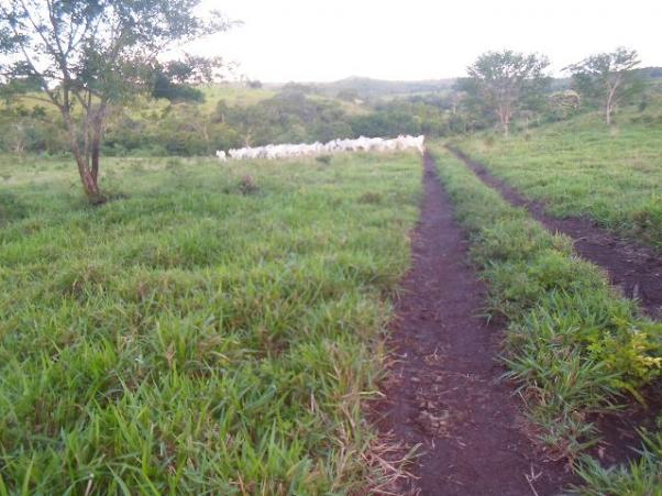 Fazenda 153 alqueires aptidao pecuaria