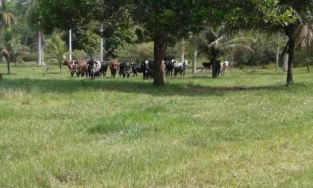 Belíssima fazenda em Cachoeiras de Macacu oportunidade!!!! - Foto 7