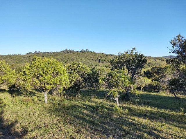 Fazenda na Cascata - 75 ha - Pelotas - RS - Foto 9