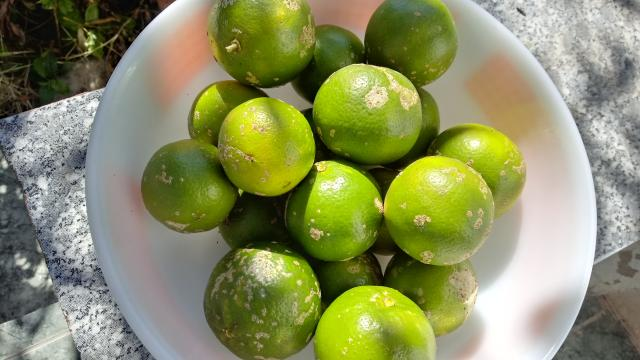 Limão Cravo (Orgânico)