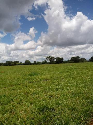 Fazenda a venda em Piracanjuba de 20 alqueires para Pecuária e lavoura - Foto 4