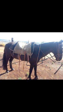 Cavalo de lida - Foto 4
