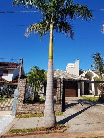 Palmeira Imperial - Foto 4
