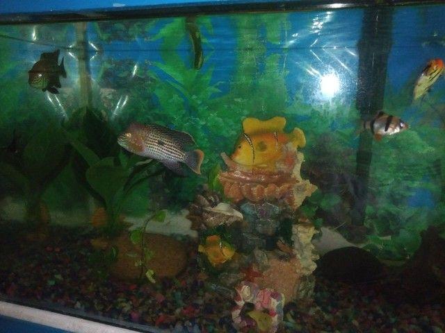Vendo aquário 120 litros com cômoda