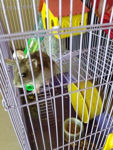 Hamister com gaiola - Foto 2