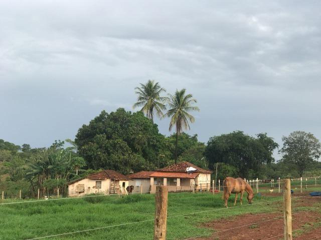 Fazenda plana e rica em água, 24 Alqueires (116.16 ha ) Bela Vista de Goias - Foto 18