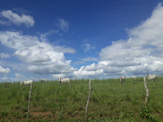 Fazenda com 190 hectares na região do vale de Monte  - Foto 9