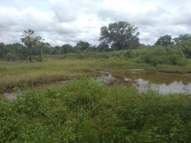 Propriedade Rural de 576 hectares de Mata e Cerrado no Piauí - Foto 11