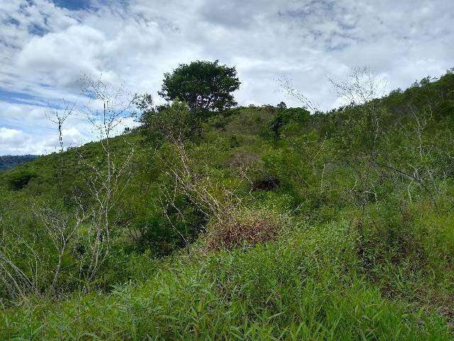 Sítio Santa Leopoldina meia légua 5 Alqueires - Foto 6