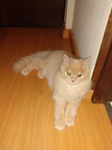 Vendo gato - Foto 3