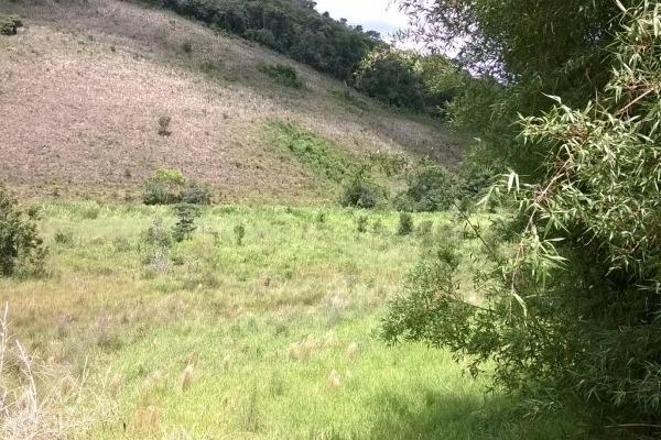Vendo- Sítio no Sul de Minas com 26 hectares!! - Foto 12