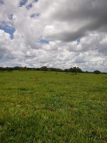 Fazenda a venda em Piracanjuba de 20 alqueires para Pecuária e lavoura - Foto 3