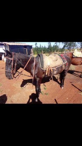 Cavalo de lida - Foto 3