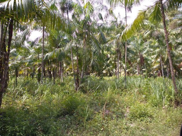 50 hectares na estrada de igarapé açu por 170 mil reais documentada - Foto 6
