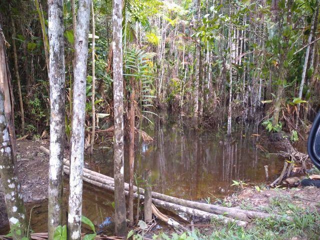50 hectares na estrada de igarapé açu por 170 mil reais documentada - Foto 11