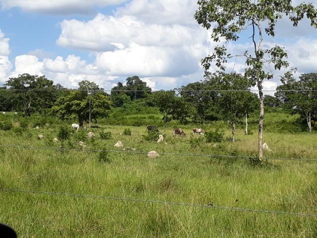 Chácara de porteira fechada na beira do rio Cuiabá com barco gado cavalo casa boa - Foto 11