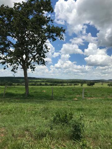 Oportunidade Extra Fazenda 100 Alqueires ou 484 Hectares Aragoiânia - Foto 5
