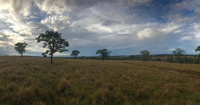 Fazenda plana e rica em água, 24 Alqueires (116.16 ha ) Bela Vista de Goias - Foto 8