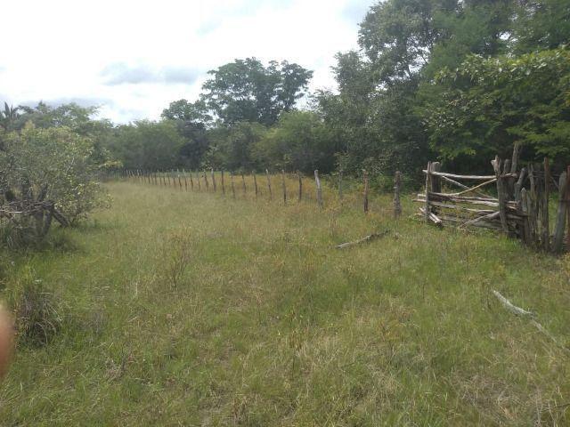 Propriedade Rural de 576 hectares de Mata e Cerrado no Piauí - Foto 13