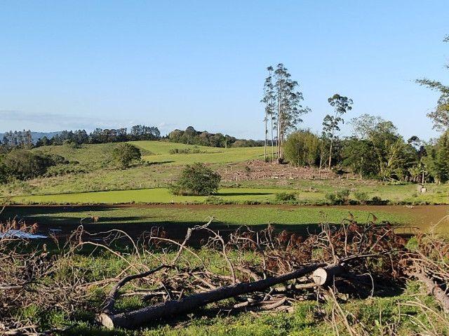 Fazenda na Cascata - 75 ha - Pelotas - RS - Foto 6