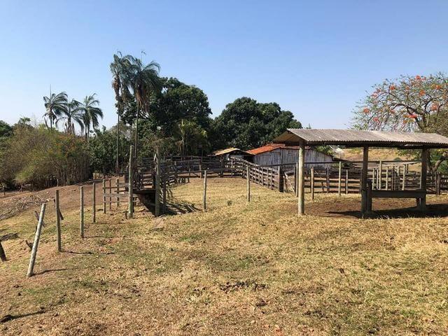 Fazenda a venda em Piracanjuba de 20 alqueires para Pecuária e lavoura - Foto 9