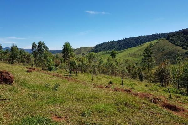 Vendo- Sítio no Sul de Minas com 26 hectares!! - Foto 10