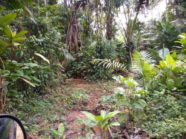 50 hectares na estrada de igarapé açu por 170 mil reais documentada - Foto 5