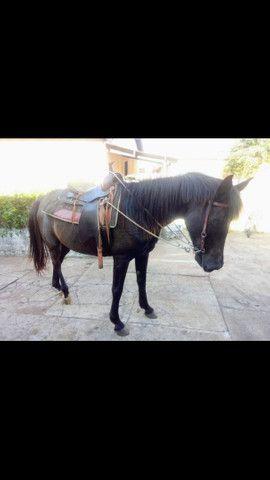 Cavalo de lida - Foto 5