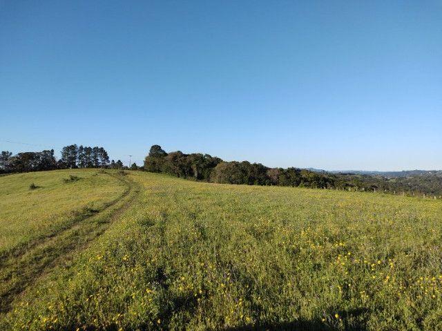 Fazenda na Cascata - 75 ha - Pelotas - RS - Foto 19