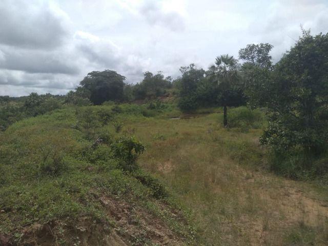 Propriedade Rural de 576 hectares de Mata e Cerrado no Piauí - Foto 12