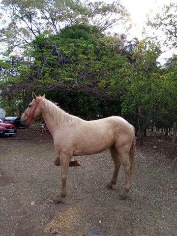 Vende se cavalo quarto de milha de vaquejada - Foto 5