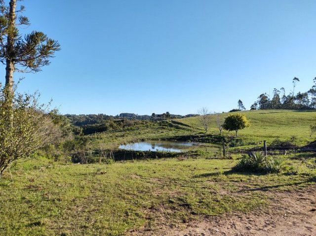 Fazenda na Cascata - 75 ha - Pelotas - RS - Foto 8