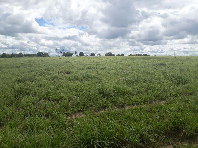 Fazenda com 190 hectares na região do vale de Monte  - Foto 4