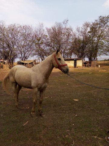 Vende se cavalo quarto de milha de vaquejada - Foto 4